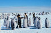 Была открыта Антарктида первой...