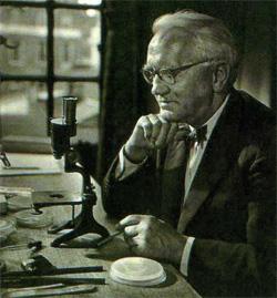 Английский бактериолог Александр Флеминг...
